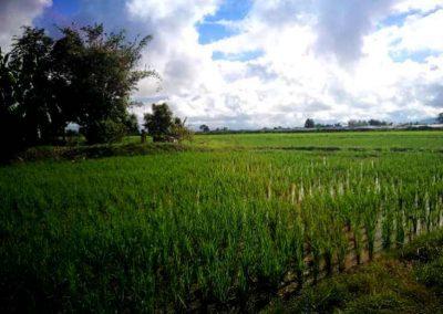bio-landwirdschaft (2)-s
