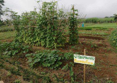 bio-landwirdschaft (3)-s